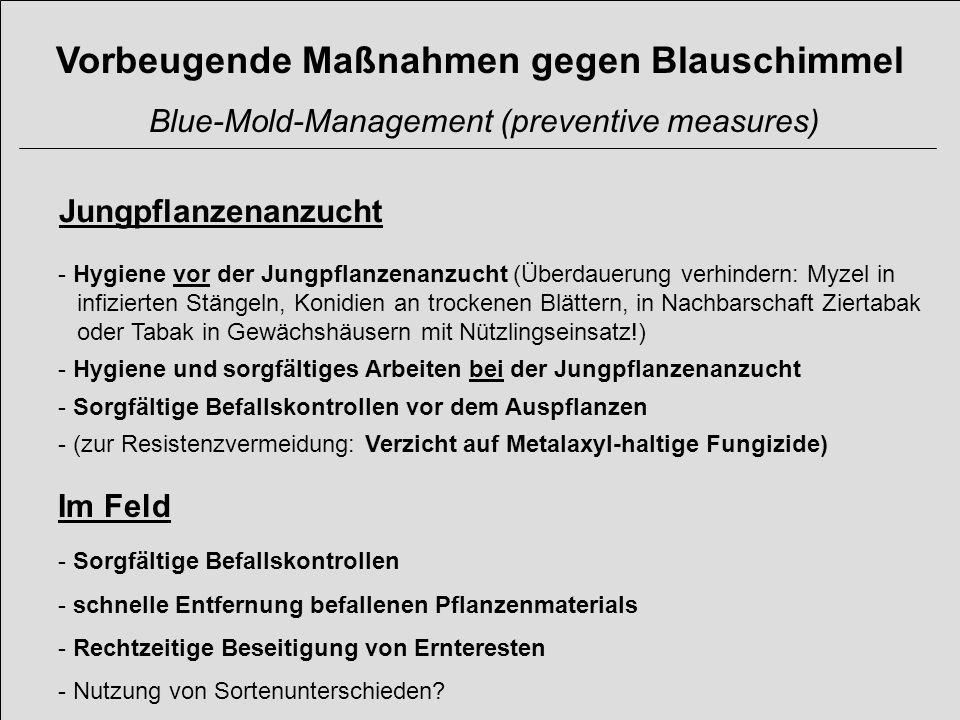 Vorbeugende Maßnahmen gegen Blauschimmel Blue-Mold-Management (preventive measures) Jungpflanzenanzucht - Hygiene vor der Jungpflanzenanzucht (Überdau