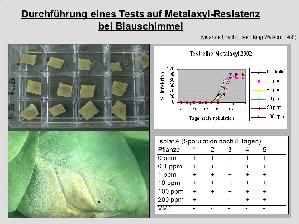 Blauschimmelresistenz gegen Metalaxyl in Deutschland Metalaxyl Resistance of Tobacco Blue Mold in Germany Rhl-Pf.