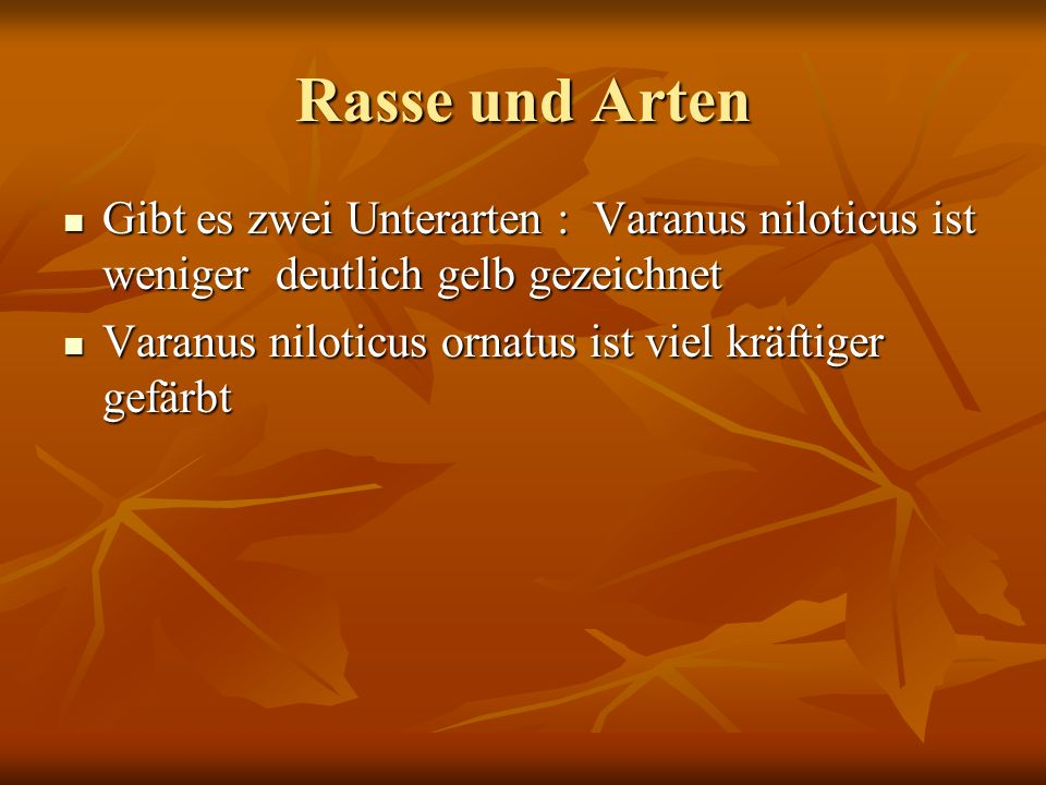 Rasse und Arten Gibt es zwei Unterarten : Varanus niloticus ist weniger deutlich gelb gezeichnet Varanus niloticus ornatus ist viel kräftiger gefärbt