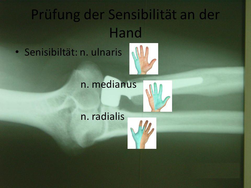 Prüfung der Sensibilität an der Hand Senisibiltät: n. ulnaris n. medianus n. radialis