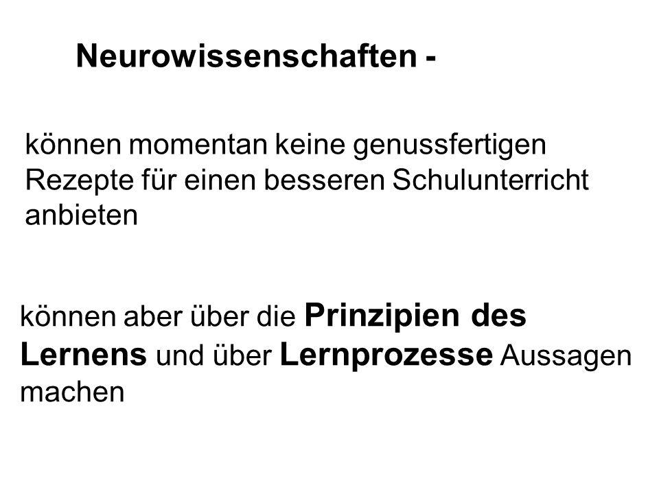 Nervenzellen werden nicht einzeln aktiv, sondern in Verbänden, d.h.