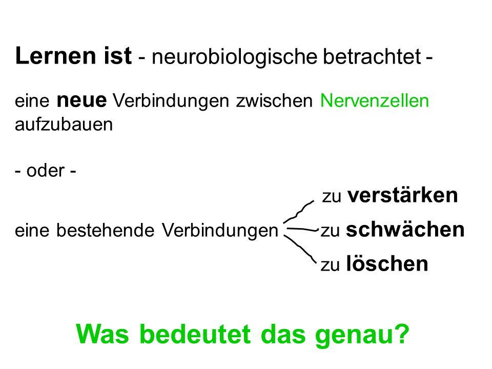 Das Gehirn empfängt Information - in Form von elektrischen Impulsen - von den Sinnesorganen (z.B Ohr, Auge etc).