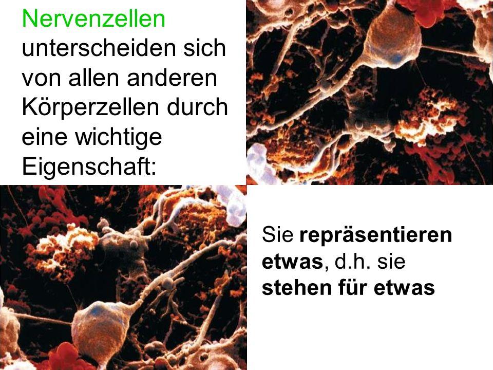 Die Weiterleitung von Information innerhalb einer Nervenzelle ist bio- elektrisch.