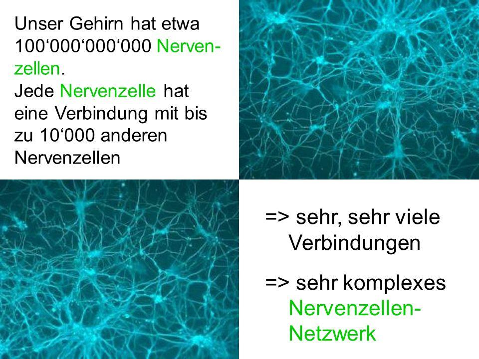 Die Nervenzellen des Gehirns können bio-elektrische Aktivität aufbauen und weiterleiten.