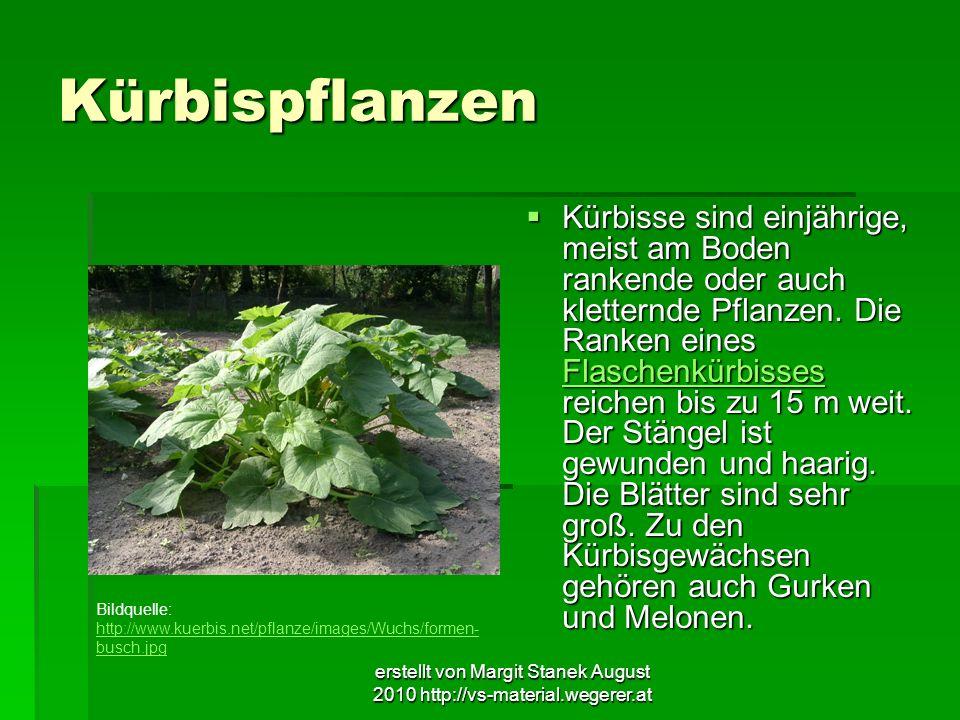 erstellt von Margit Stanek August 2010 http://vs-material.wegerer.at Kürbispflanzen Kürbisse sind einjährige, meist am Boden rankende oder auch klette