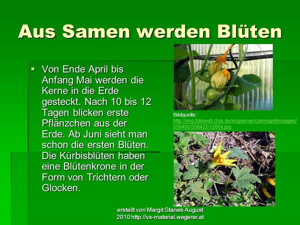 erstellt von Margit Stanek August 2010 http://vs-material.wegerer.at Aus Samen werden Blüten Von Ende April bis Anfang Mai werden die Kerne in die Erd