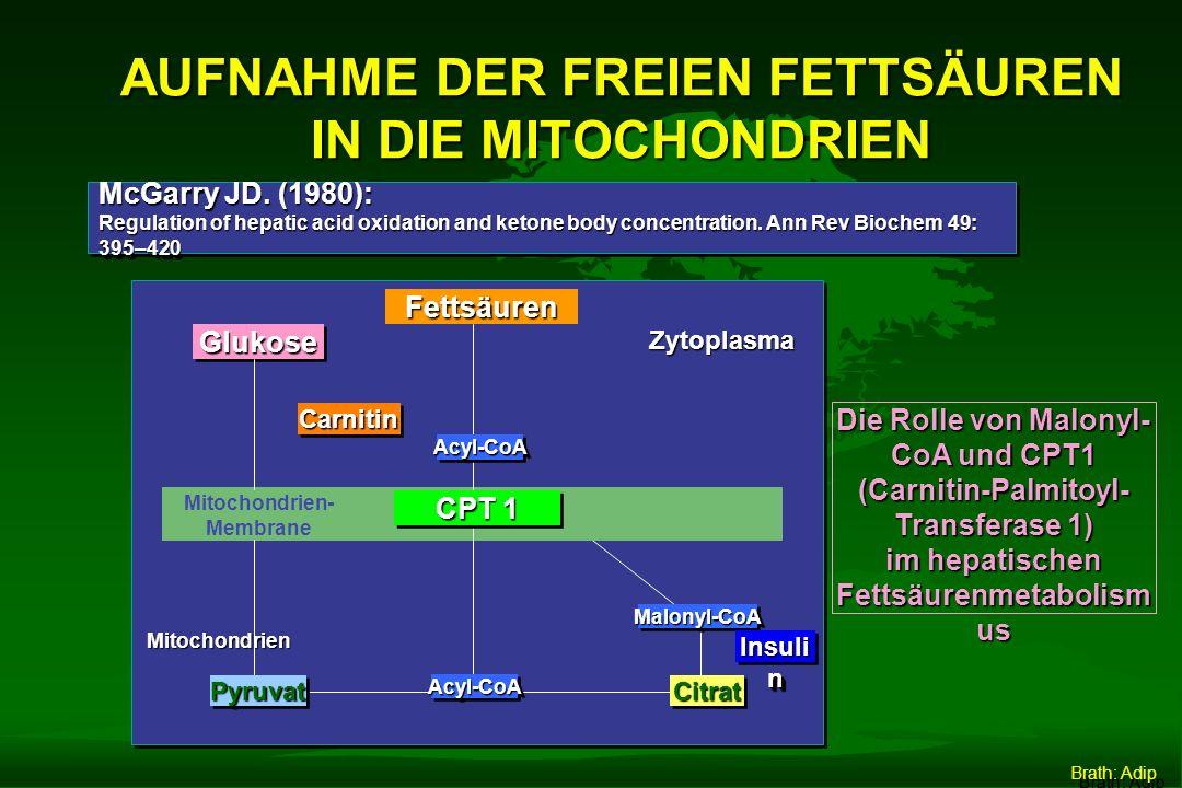 DER GLYKÄMISCHE INDEX... definiert den Effekt von KH-hältigen Lebensmitteln auf den Blutzucker.