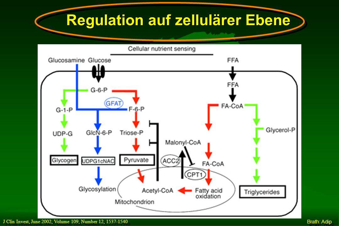 AUFNAHME DER FREIEN FETTSÄUREN IN DIE MITOCHONDRIEN Fettsäuren GlukoseGlukose Mitochondrien- Membrane CPT 1 Acyl-CoAAcyl-CoA CarnitinCarnitin PyruvatPyruvatCitratCitrat Malonyl-CoAMalonyl-CoA Insuli n Zytoplasma Mitochondrien Acyl-CoAAcyl-CoA Die Rolle von Malonyl- CoA und CPT1 (Carnitin-Palmitoyl- Transferase 1) im hepatischen Fettsäurenmetabolism us McGarry JD.
