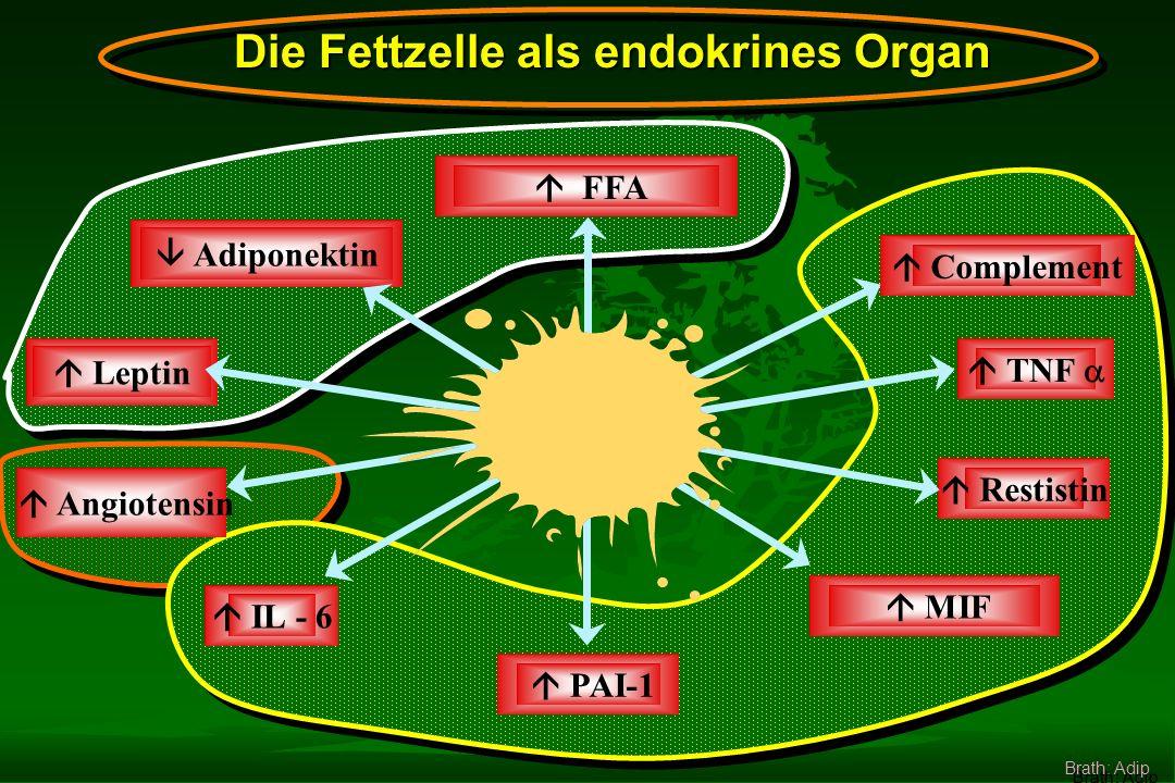 MIF FFA Complement TNF IL - 6 PAI-1 Adiponektin Leptin Restistin Angiotensin Die Fettzelle als endokrines Organ Brath: Adip