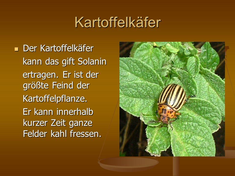 Kartoffelkäfer Der Kartoffelkäfer Der Kartoffelkäfer kann das gift Solanin kann das gift Solanin ertragen. Er ist der größte Feind der ertragen. Er is