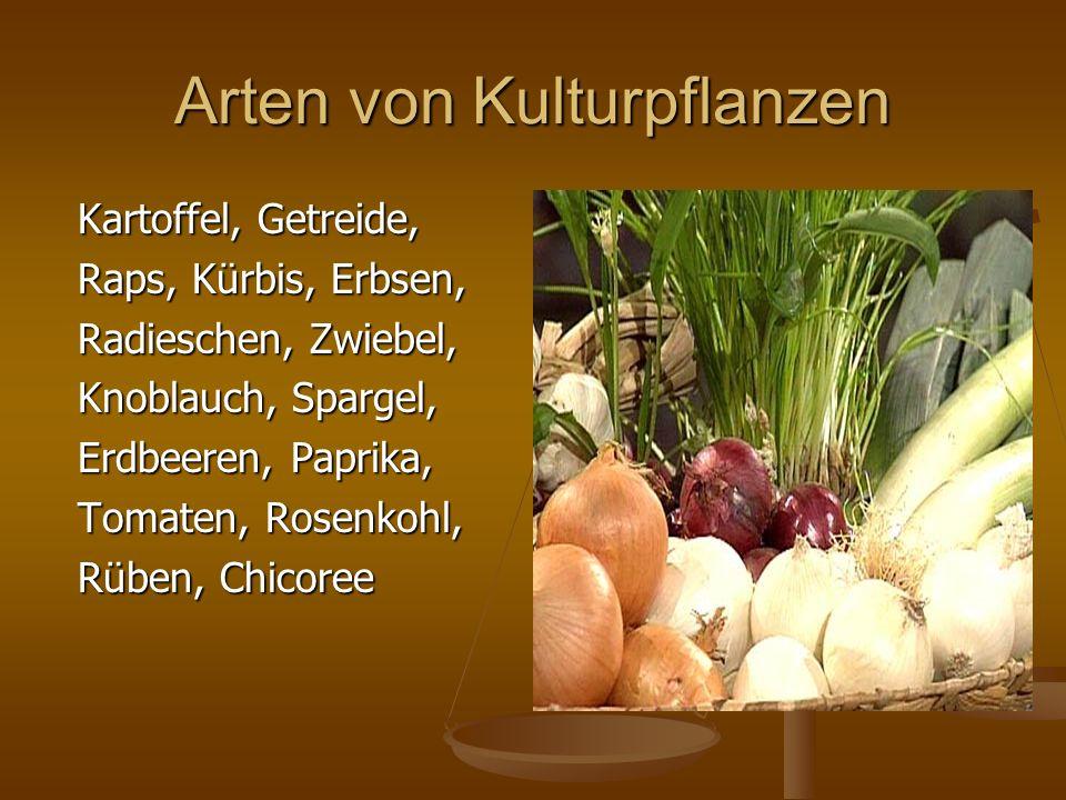 Arten von Kulturpflanzen Kartoffel, Getreide, Kartoffel, Getreide, Raps, Kürbis, Erbsen, Raps, Kürbis, Erbsen, Radieschen, Zwiebel, Radieschen, Zwiebe