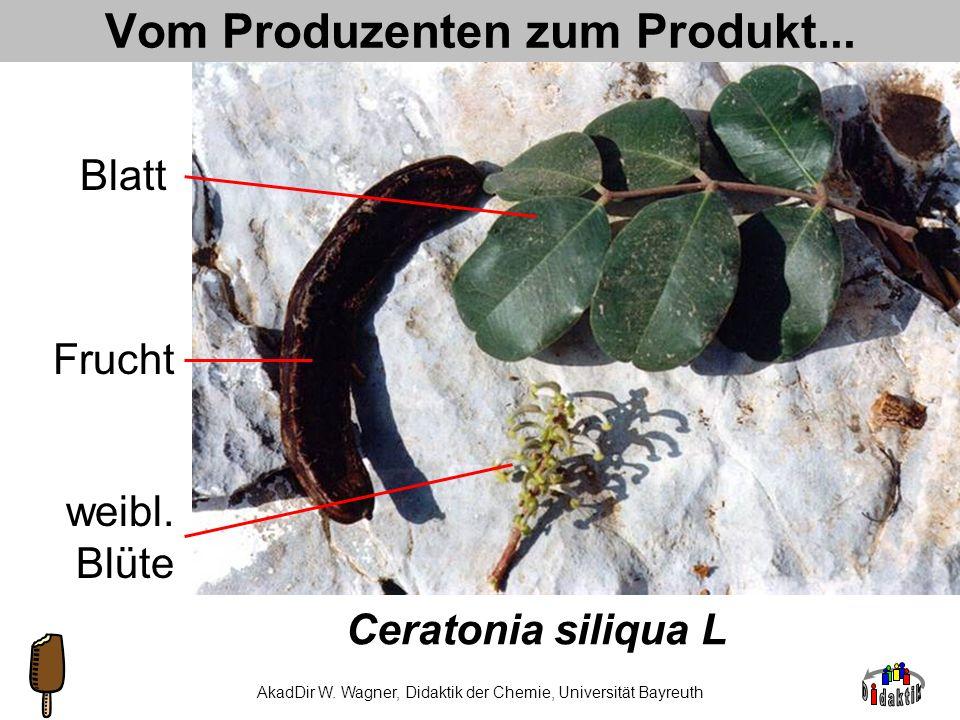 AkadDir W. Wagner, Didaktik der Chemie, Universität Bayreuth Johannisbrotkern-Fabrik Stabilisa- toren- produktion durch Ceratonia siliqua L., (Habitus