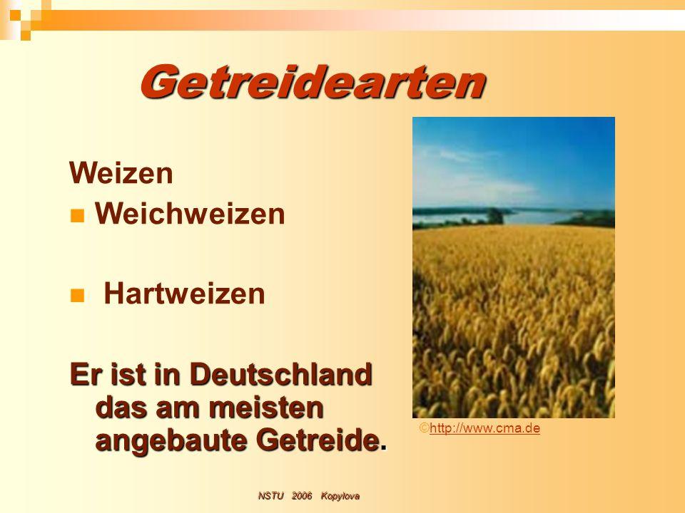 Getreidearten Weizen Weichweizen Hartweizen Er ist in Deutschland das am meisten angebaute Getreide. NSTU 2006 Kopylova ©http://www.cma.dehttp://www.c