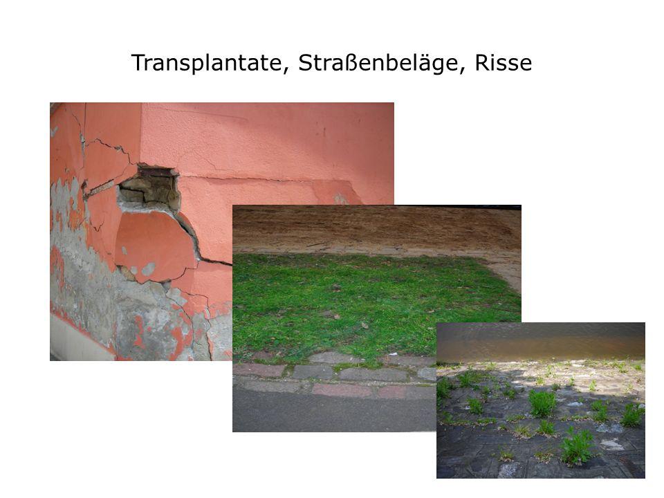 Transplantate, Straßenbeläge, Risse