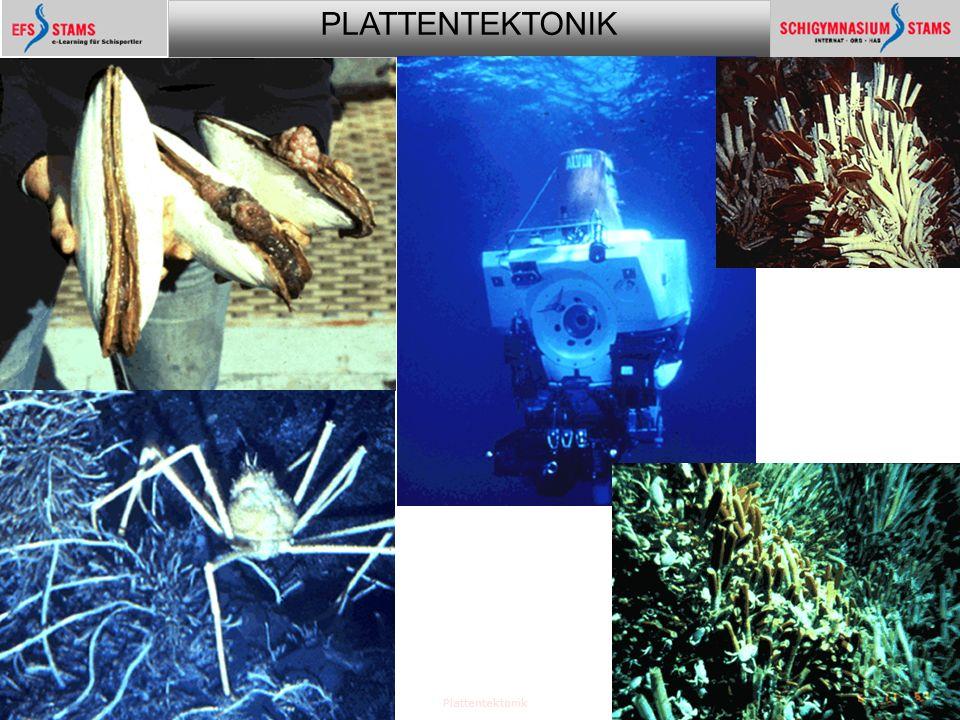 PLATTENTEKTONIK Plattentektonik27