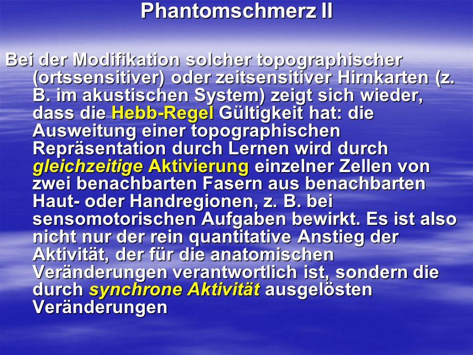 Phantomschmerz II Bei der Modifikation solcher topographischer (ortssensitiver) oder zeitsensitiver Hirnkarten (z. B. im akustischen System) zeigt sic