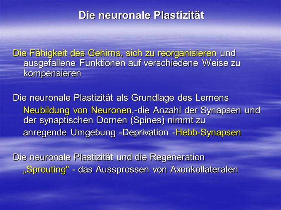 Die neuronale Plastizität Die Fähigkeit des Gehirns, sich zu reorganisieren und ausgefallene Funktionen auf verschiedene Weise zu kompensieren Die neu