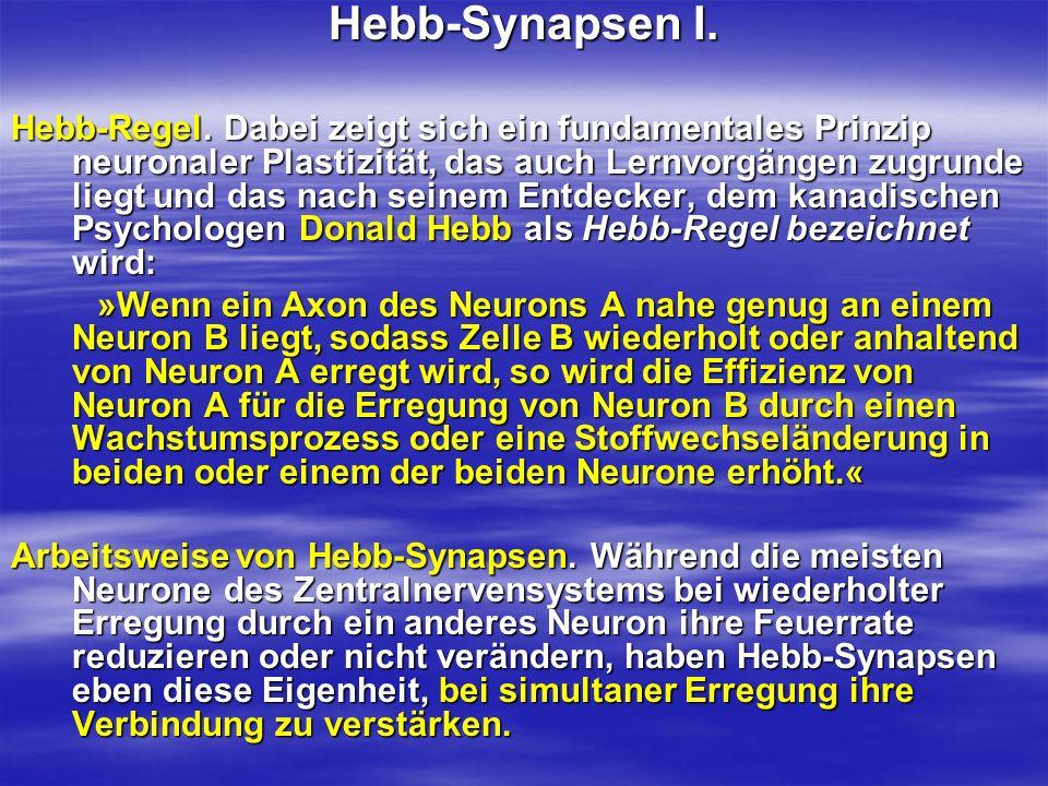 Hebb-Synapsen I. Hebb-Regel. Dabei zeigt sich ein fundamentales Prinzip neuronaler Plastizität, das auch Lernvorgängen zugrunde liegt und das nach sei