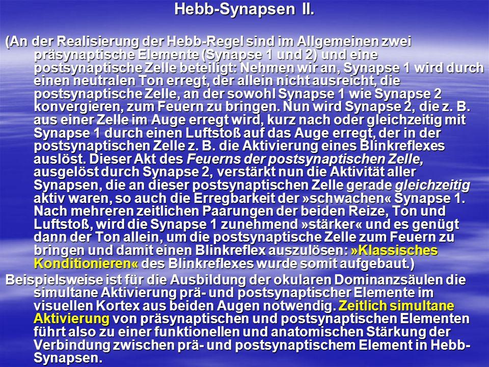 Hebb-Synapsen II. (An der Realisierung der Hebb-Regel sind im Allgemeinen zwei präsynaptische Elemente (Synapse 1 und 2) und eine postsynaptische Zell