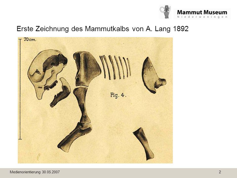 Medienorientierung 30.05.2007 2 Erste Zeichnung des Mammutkalbs von A. Lang 1892