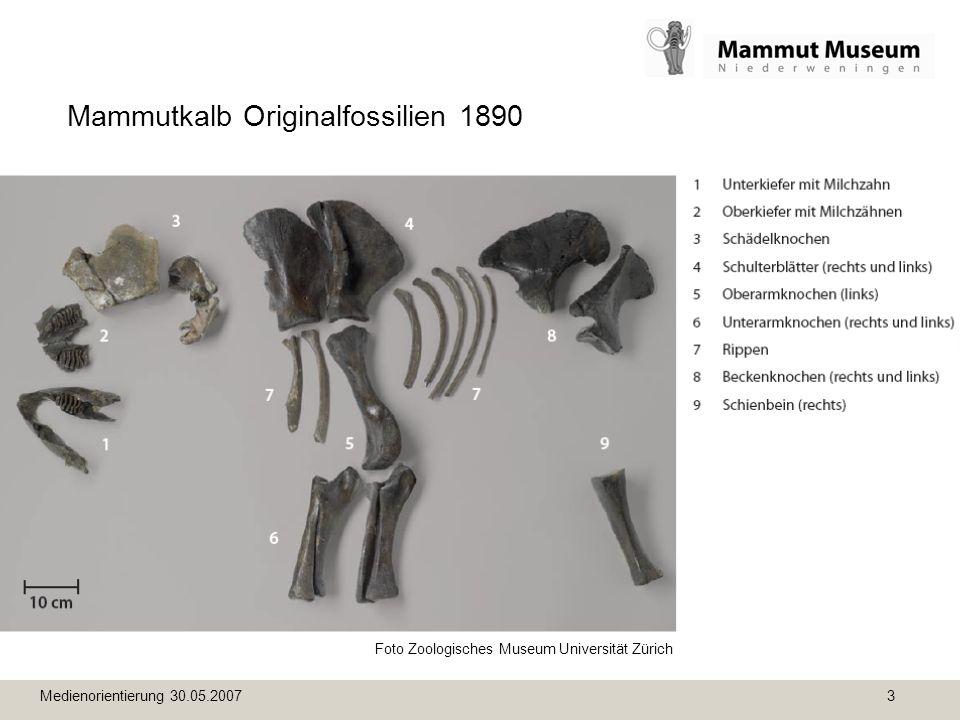Medienorientierung 30.05.2007 3 Mammutkalb Originalfossilien 1890 Foto Zoologisches Museum Universität Zürich