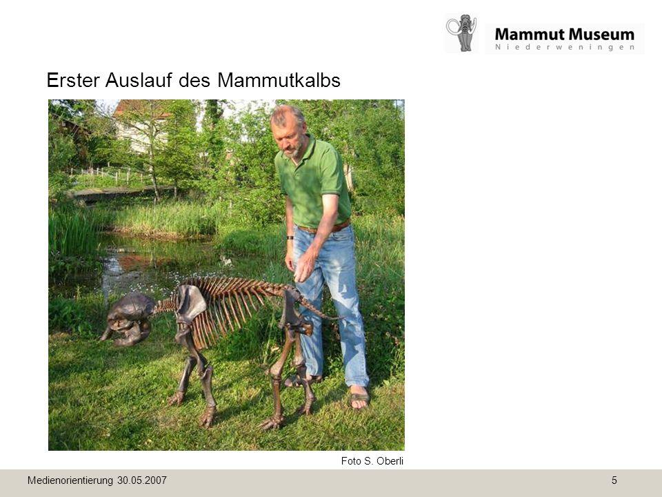 Medienorientierung 30.05.2007 5 Erster Auslauf des Mammutkalbs Foto S. Oberli