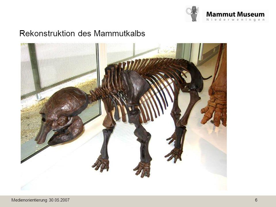 Medienorientierung 30.05.2007 6 Rekonstruktion des Mammutkalbs