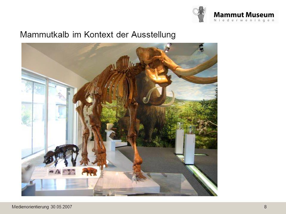 Medienorientierung 30.05.2007 8 Mammutkalb im Kontext der Ausstellung