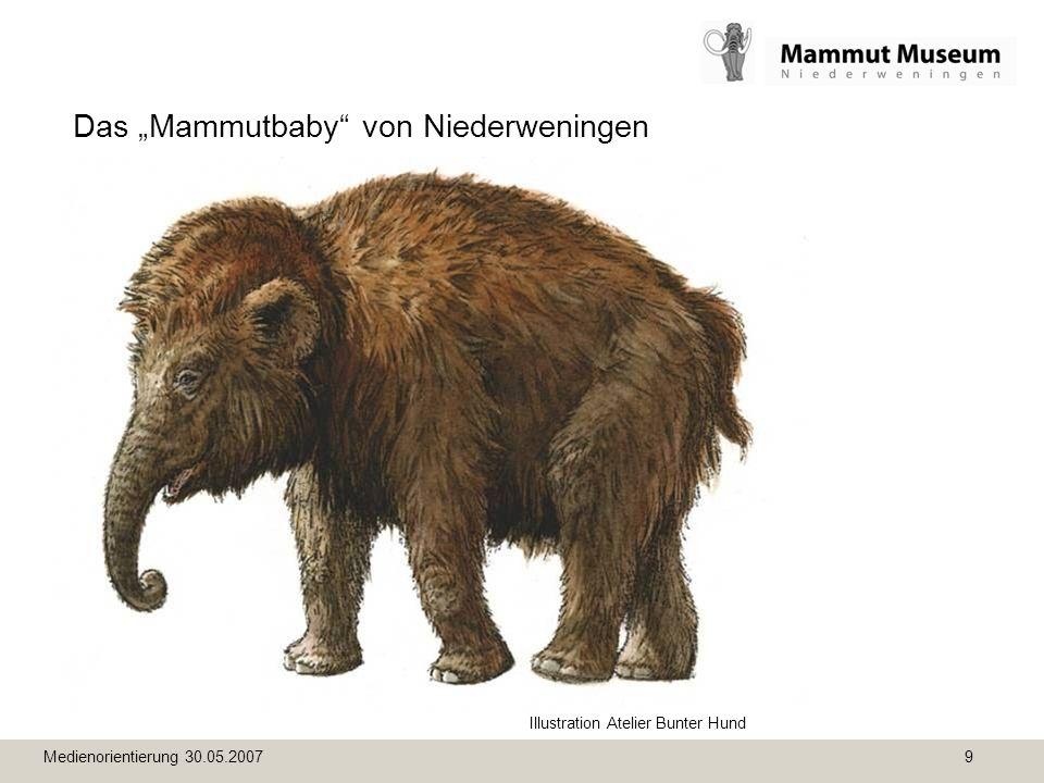 Medienorientierung 30.05.2007 9 Das Mammutbaby von Niederweningen Illustration Atelier Bunter Hund