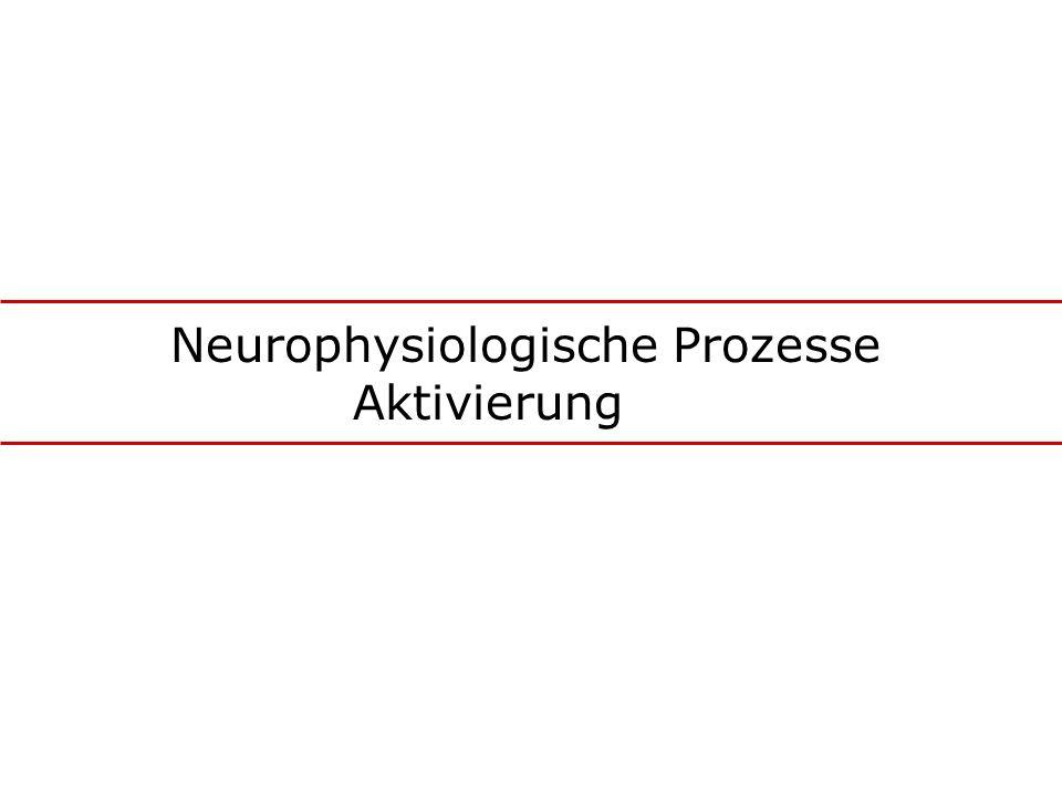 Neurophysiologische Prozesse Aktivierung