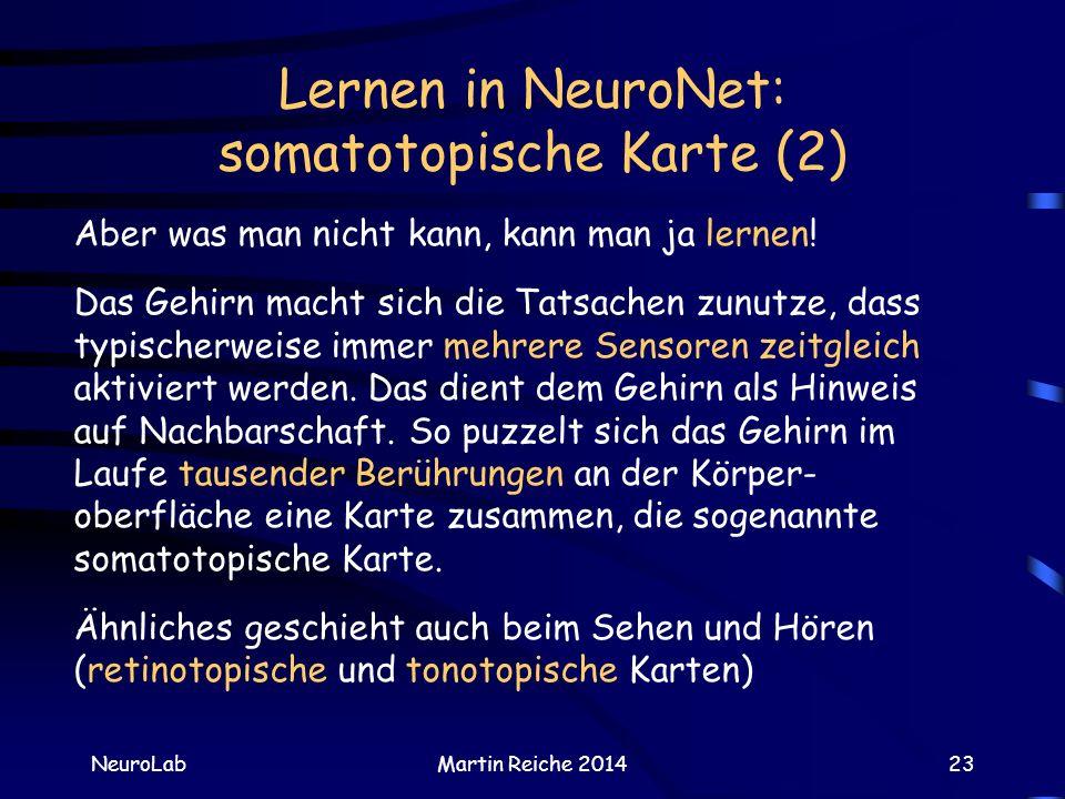 Lernen in NeuroNet: somatotopische Karte (2) NeuroLabMartin Reiche 201423 Aber was man nicht kann, kann man ja lernen! Das Gehirn macht sich die Tatsa