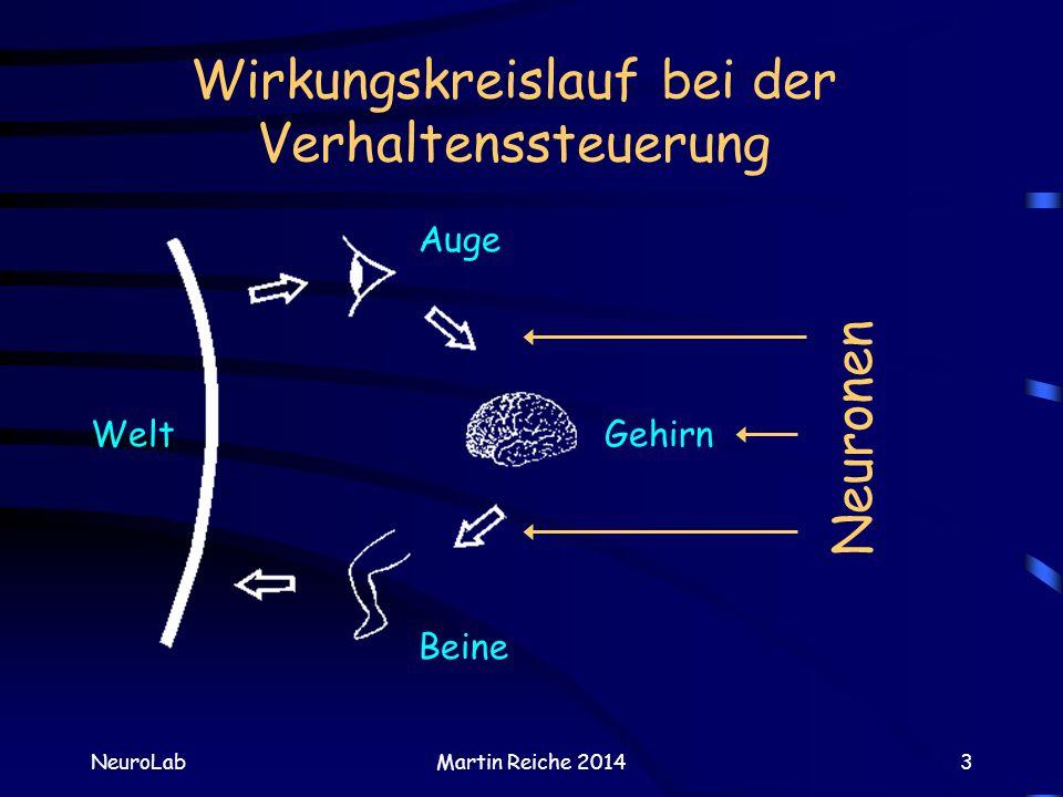 Wirkungskreislauf bei der Verhaltenssteuerung NeuroLabMartin Reiche 20143 Welt Auge Gehirn Beine Neuronen