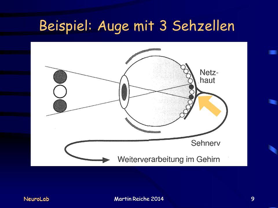 Beispiel: Auge mit 3 Sehzellen NeuroLabMartin Reiche 20149