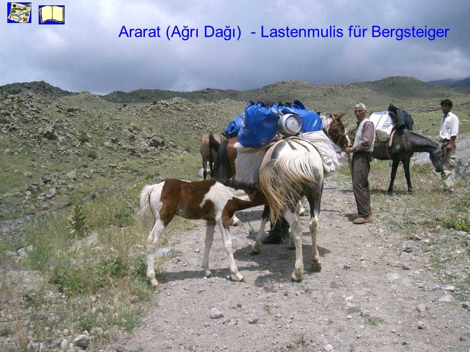 Ararat (Ağrı Dağı) - Lastenmulis für Bergsteiger