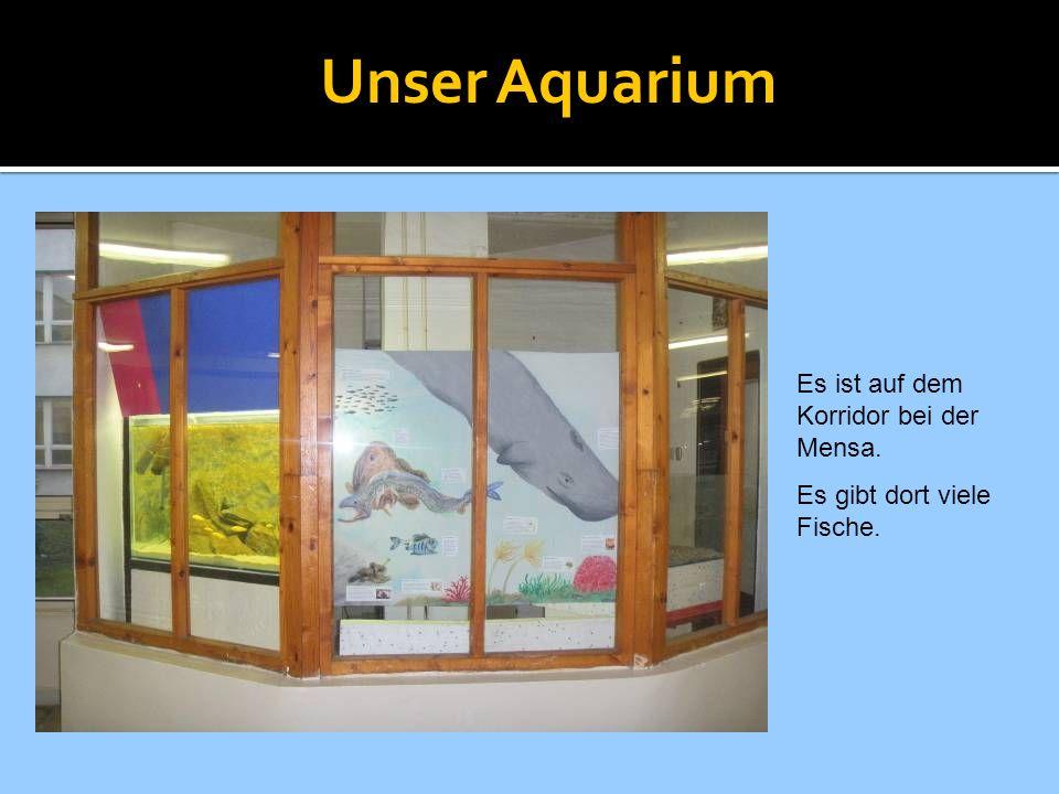Unser Aquarium Es ist auf dem Korridor bei der Mensa. Es gibt dort viele Fische.