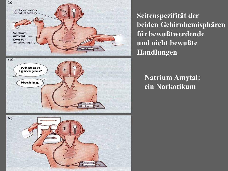 Seitenspezifität der beiden Gehirnhemisphären für bewußtwerdende und nicht bewußte Handlungen Natrium Amytal: ein Narkotikum