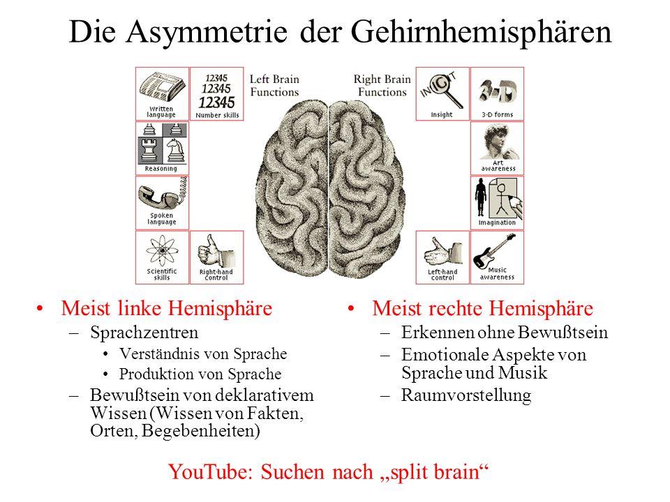 Die Asymmetrie der Gehirnhemisphären Meist linke Hemisphäre –Sprachzentren Verständnis von Sprache Produktion von Sprache –Bewußtsein von deklarativem