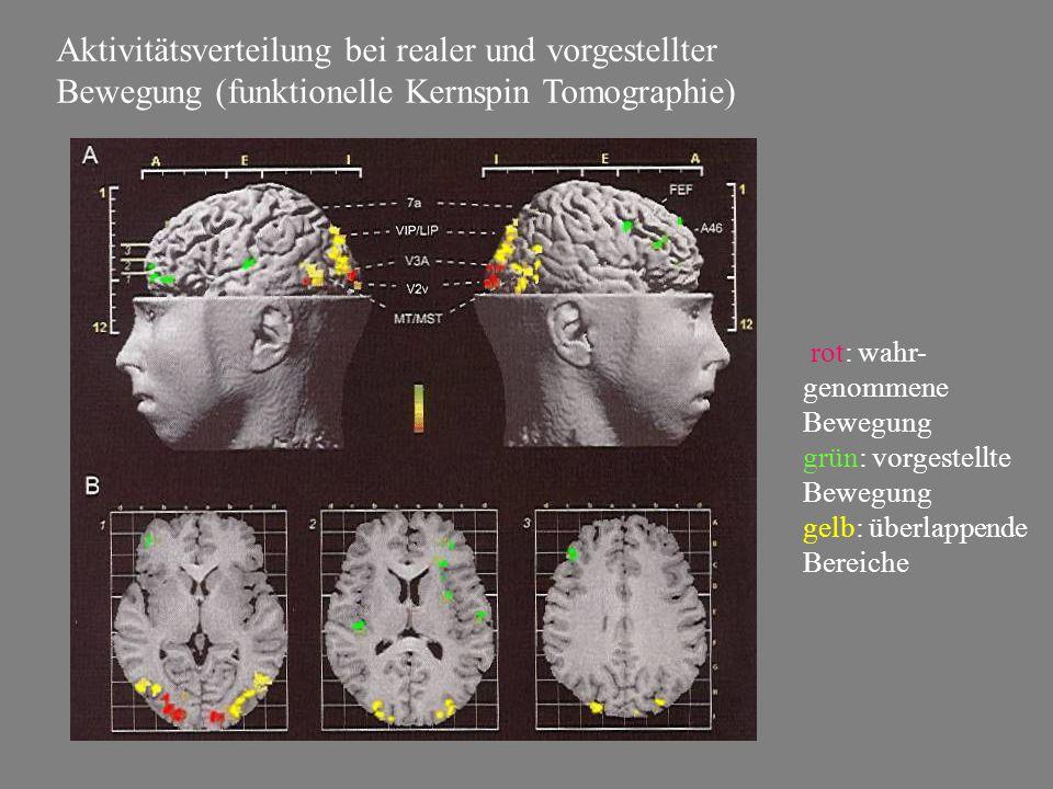 Aktivitätsverteilung bei realer und vorgestellter Bewegung (funktionelle Kernspin Tomographie) rot: wahr- genommene Bewegung grün: vorgestellte Bewegu