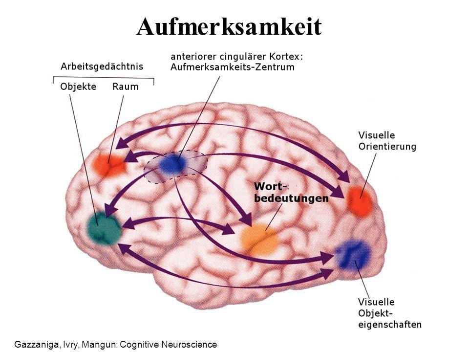 Aufmerksamkeit Gazzaniga, Ivry, Mangun: Cognitive Neuroscience