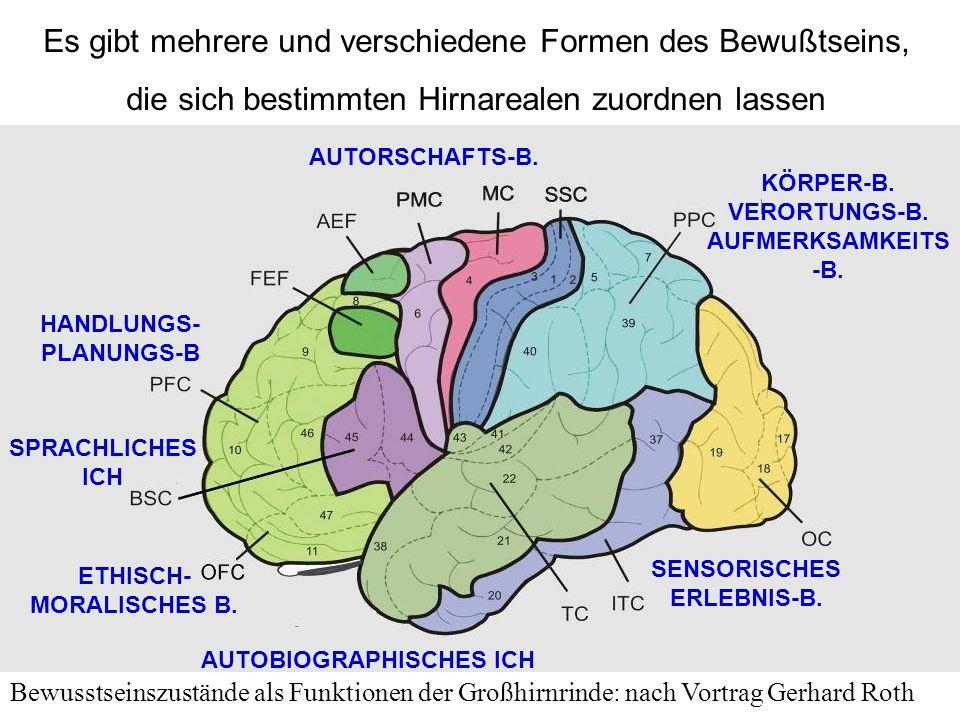 SENSORISCHES ERLEBNIS-B. AUTORSCHAFTS-B. HANDLUNGS- PLANUNGS-B SPRACHLICHES ICH AUTOBIOGRAPHISCHES ICH ETHISCH- MORALISCHES B. KÖRPER-B. VERORTUNGS-B.