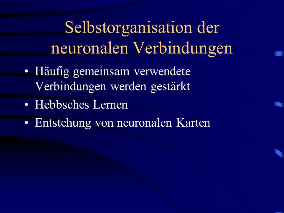 Selbstorganisation der neuronalen Verbindungen Häufig gemeinsam verwendete Verbindungen werden gestärkt Hebbsches Lernen Entstehung von neuronalen Kar
