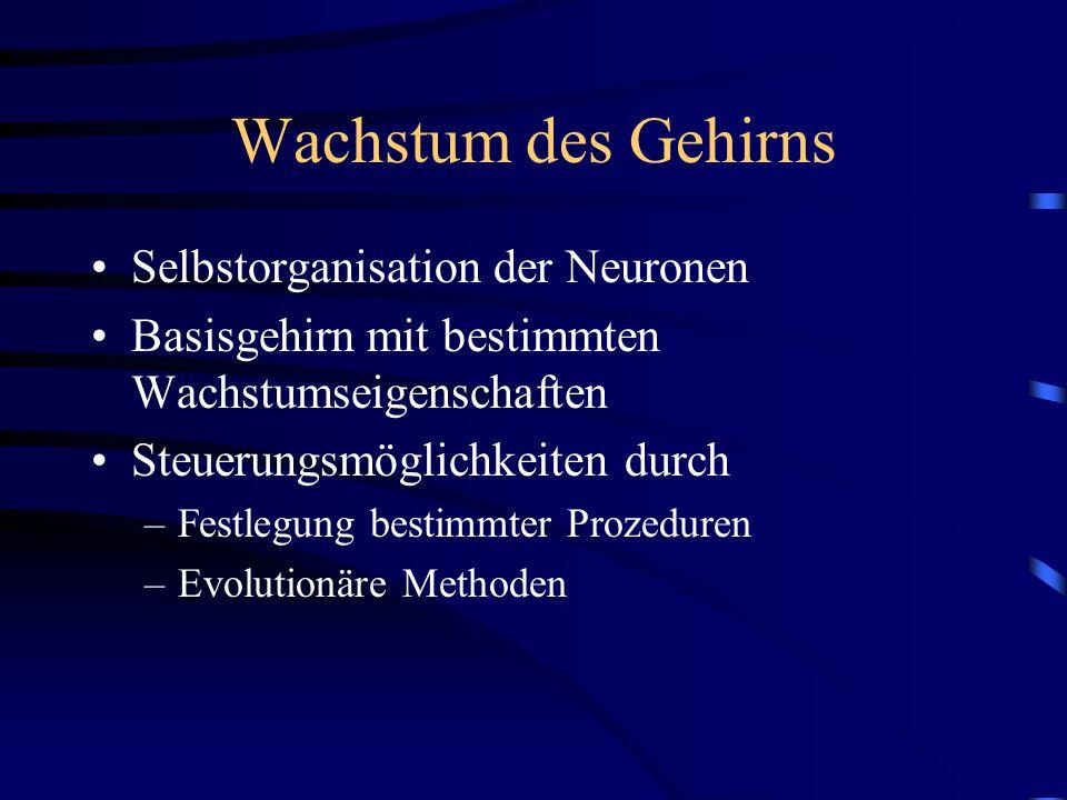 Wachstum des Gehirns Selbstorganisation der Neuronen Basisgehirn mit bestimmten Wachstumseigenschaften Steuerungsmöglichkeiten durch –Festlegung besti