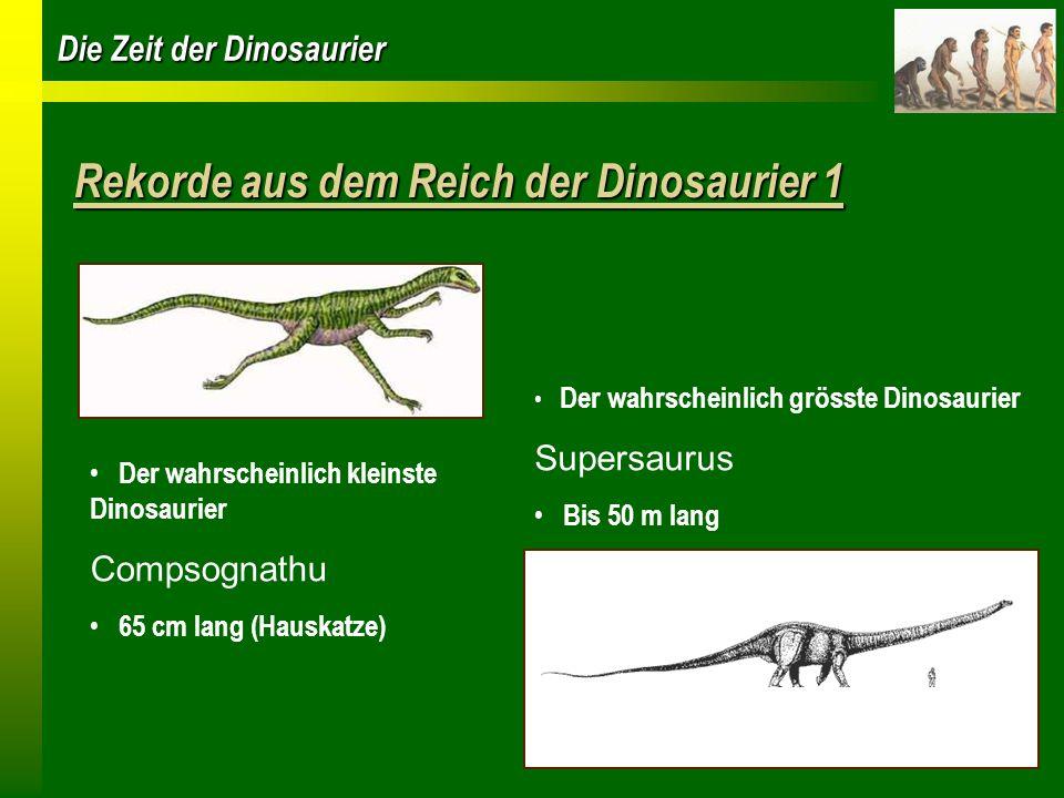 Die Zeit der Dinosaurier Rekorde aus dem Reich der Dinosaurier 1 Der wahrscheinlich kleinste Dinosaurier Compsognathu 65 cm lang (Hauskatze) Der wahrs