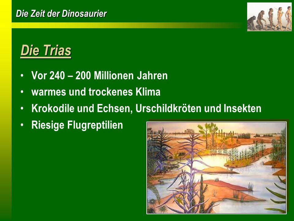 Die Zeit der Dinosaurier Die Trias Vor 240 – 200 Millionen Jahren warmes und trockenes Klima Krokodile und Echsen, Urschildkröten und Insekten Riesige