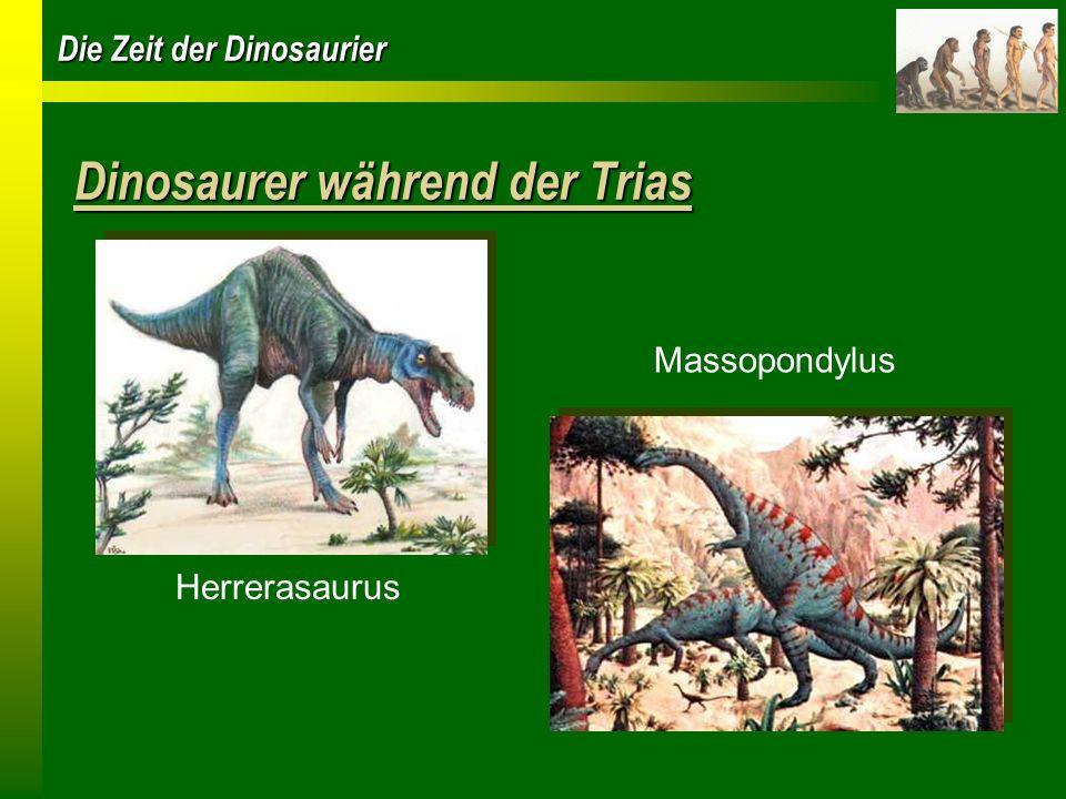 Die Zeit der Dinosaurier Die Jurazeit vor 200 -140 Millionen Jahren Feuchtes und mildes Klima Grosszügige Vegetation Insekten und Echsen sind Nahrung für die Dinosaurier Erste Vorfahren der Vögel kreisten am Himmel