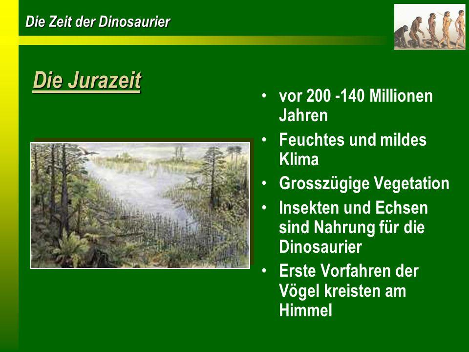 Die Zeit der Dinosaurier Die Jurazeit vor 200 -140 Millionen Jahren Feuchtes und mildes Klima Grosszügige Vegetation Insekten und Echsen sind Nahrung