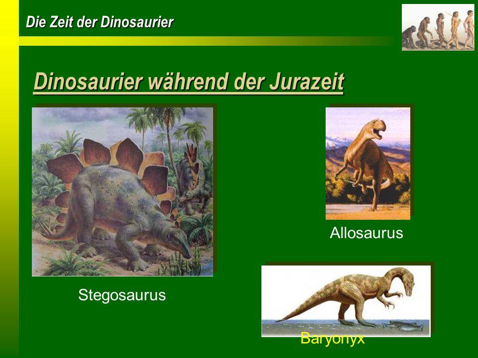 Die Zeit der Dinosaurier Dinosaurier während der Jurazeit Baryonyx Allosaurus Stegosaurus