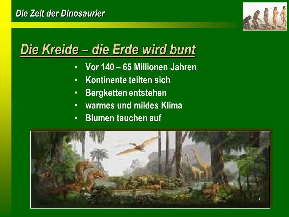 Die Zeit der Dinosaurier Die Kreide – die Erde wird bunt Vor 140 – 65 Millionen Jahren Kontinente teilten sich Bergketten entstehen warmes und mildes