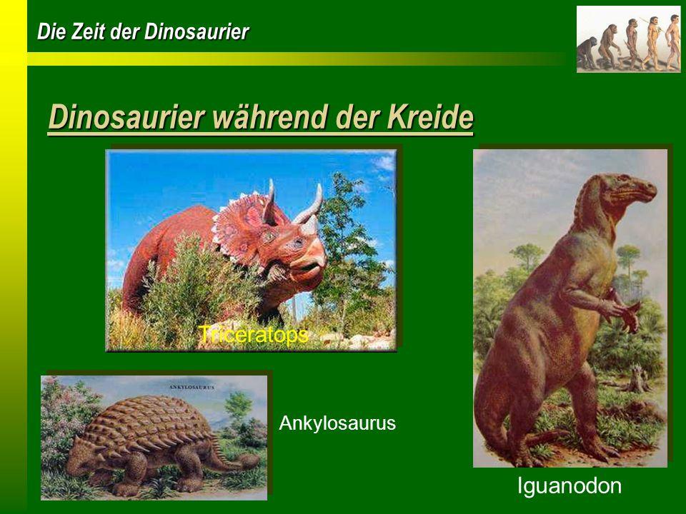 Die Zeit der Dinosaurier Die grössten Dinosaurier Sauropoden belebten die ganze Erde Pflanzenfresser wurden bis zu 30 m lang