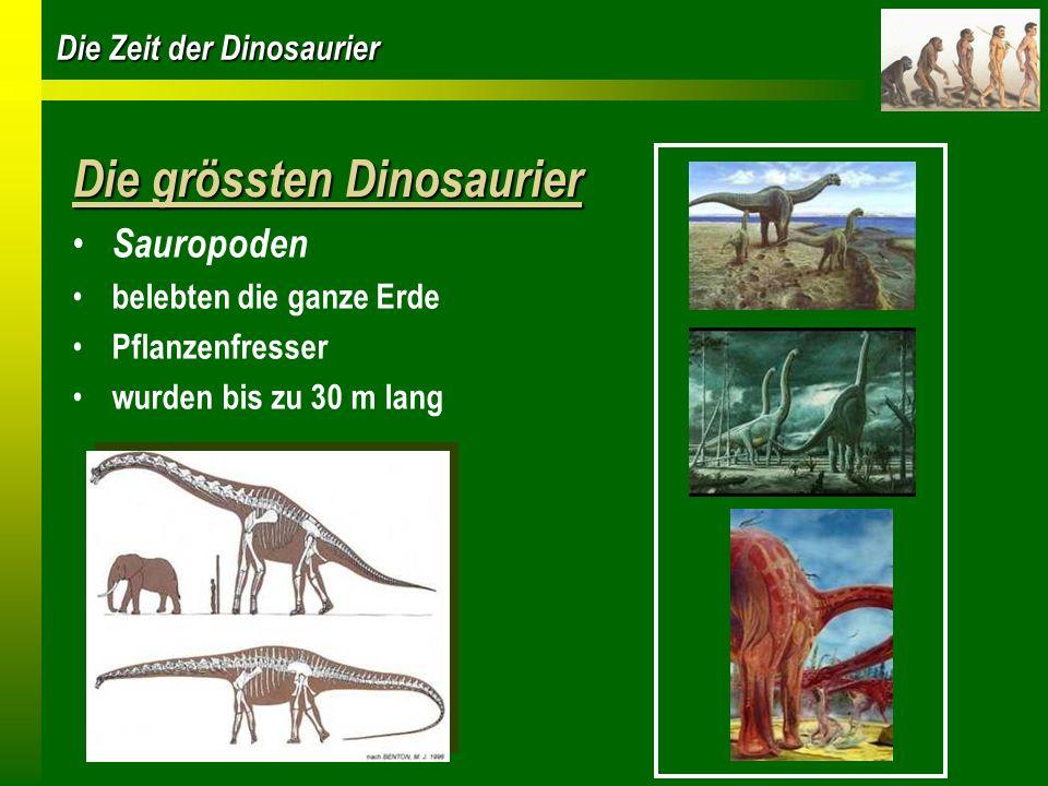 Die Zeit der Dinosaurier Raubtier Dinosaurier Carnosaurier kräftiger Körper und lange, muskulöse Beine jagten im Rudel oder alleine Allosaurus Veliceraptor
